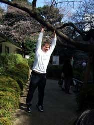 サイモンと桜の木