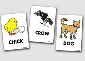 8月の目標 「身近な動物」を英語で言えるようになる